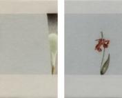 History 404 www - Indoor Impr - Avondland met fracties van twee kunstwerken en een verdwenen bloem, 2020 A6 potlood - copie