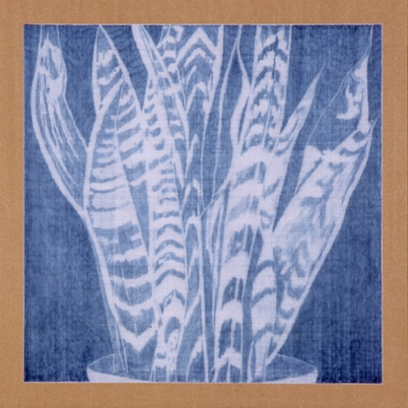 Room - copie